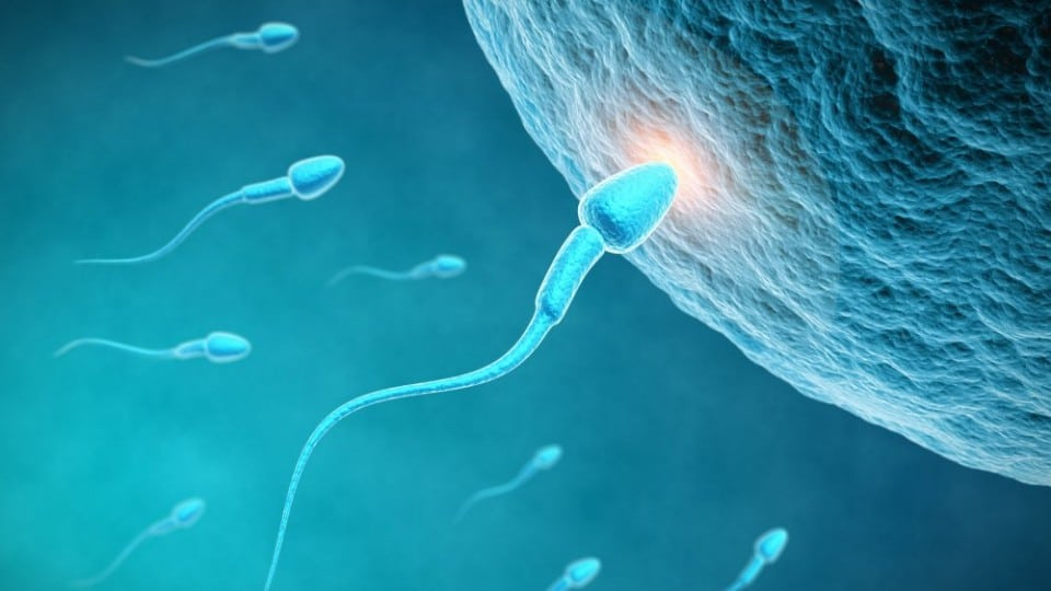 Autoconservation des ovocytes : où en est-on ?